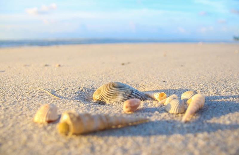 Anastasia State Park Shells